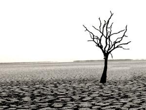 dead_tree_by_Aelro